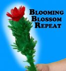 Blooming Blossom